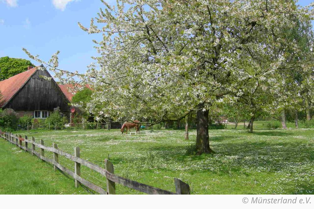 about Westphalia